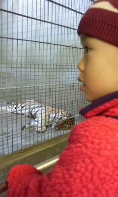 浜松市立動物園 希羅と虎.jpg