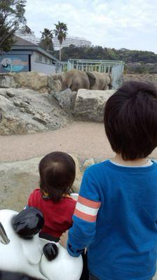 kyoudaide safaripa-ku.jpg