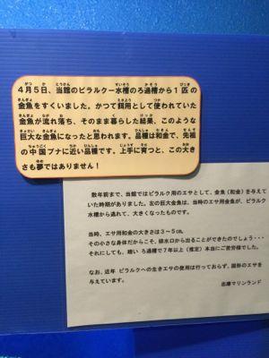 nigetakingyo setsumei 2015.jpg