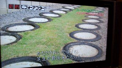 niwaniumeta tire.jpg