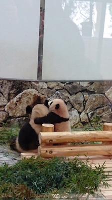 onbu panda 201726.jpg