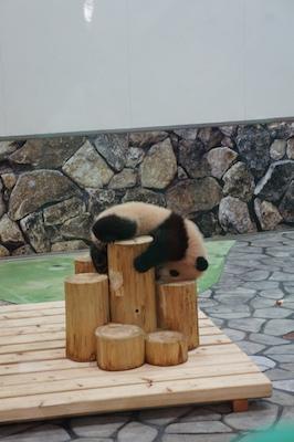 panda 2 201726.jpg