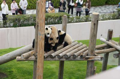 panda oyako.jpg