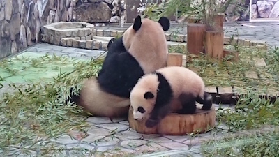 panda201924 1.jpg