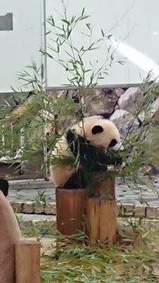 panda201924 2.jpg