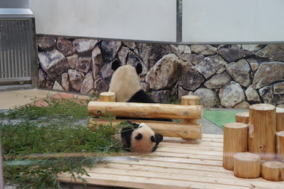 panda3 201726.jpg