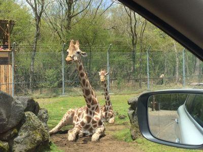 safari2 2015.jpg