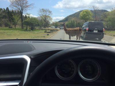 safari3 2015.jpg